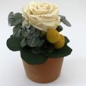 Fehér rózsa cserépben, Dekoráció, Mindenmás, Otthon, lakberendezés, Dísz, Virágkötés, Egyszerű és csodálatos kis asztaldísz, mely mindig ilyen szép marad. Fehér rózsa, zölddel, kis virág..., Meska