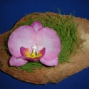 rózsaszín agyag orchidea fél kókuszban, Dekoráció, Otthon, lakberendezés, Dísz, Festett tárgyak, Kerámia, rózsaszín agyag orchidea egy fél kókuszdióban  kérésre más színben is elkészítem  Kókusz szélesség ..., Meska