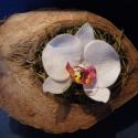 fehér agyag orchidea fél kókuszban, Dekoráció, Otthon, lakberendezés, Dísz, Festett tárgyak, Kerámia, fehér agyag orchidea egy fél kókuszdióban  kérésre más színben is elkészítem  Kókusz szélesség 24 c..., Meska
