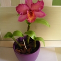 cattleya orchidea agyagból, 1 virággal, Dekoráció, Otthon, lakberendezés, Dísz, , Meska