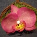 phalaenosis (lepke) orchidea virág termésben - magenta, Dekoráció, Otthon, lakberendezés, Dísz, Kerámia, Mindenmás, phalaenopsis (lepke) orchidea virág agyagból, magenta (rózsaszín) színben, natúr színű badam termés..., Meska