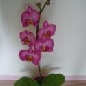 agyag orchidea - phalaenopsis rózsaszín, Dekoráció, Otthon, lakberendezés, Dísz, Festett tárgyak, Kerámia, orchidea agyagból és drótból, olajfestékkel színezve. Nem törékeny, és nem kell locsolni!   jelenle..., Meska