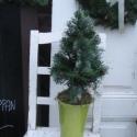 Mini Kézműves Fenyőfa - Normand fenyőből, Karácsonyi, adventi apróságok, Esküvő, Dekoráció, Otthon, lakberendezés, Fotó, grafika, rajz, illusztráció, Virágkötés, Kézműves, Természetes Normand fenyőből készült Fenyőfácska, mindazoknak akik szeretik a természetes..., Meska