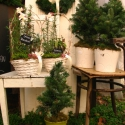 Egészség-Kosár Fűszerrajongóknak, Karácsonyi, adventi apróságok, Esküvő, Dekoráció, Otthon, lakberendezés, Fotó, grafika, rajz, illusztráció, Virágkötés, Kézműves Egészség-Kosár Fűszerimádóknak  Vízhatlan anyaggal kibélelt Fehér füles kosárba ültettem 3..., Meska