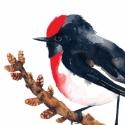 Pirossapkás cinegelégykapó - Print (Akvarell), Képzőművészet , Otthon, lakberendezés, Illusztráció, Fotó, grafika, rajz, illusztráció, Rajongok a madarakért, csodálatos teremtmények és egy-egy ilyen illusztráció egészen meg tudja válto..., Meska