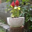Beton virágtartó,  turul motívummal, Otthon, lakberendezés, Dekoráció, Mindenmás, Kaspó, virágtartó, váza, korsó, cserép, Kőfaragás, Mindenmás, Betonból készült, beültethető virágtartó, de akár kaspónak is használható.   Magasság: 11 cm, átmér..., Meska