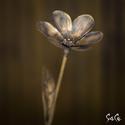 Margeréta, Dekoráció, Otthon, lakberendezés, Dísz, Kaspó, virágtartó, váza, korsó, cserép, Fémmegmunkálás, Lepj meg valakit egy igazán egyedi virággal! Margaréta rézből! Magassága: 30 cm., Meska