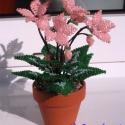 Barack színű ciklámen cserépben gyöngyből, Dekoráció, Otthon, lakberendezés, Dísz, Gyöngyfűzés, Virágkötés, 5 cm átmérőjű cserépbe készítettem  5 szál -3 cm átmérőjű-  virágból, 3 bimbóból áll több levéllel ..., Meska
