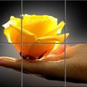 Rózsa tenyérben csempekép, Dekoráció, Képzőművészet , Konyhafelszerelés, Kép, Kerámia, Csempe kép. 6 db 108x108 mm minőségi csempe lapok felületébe égetem 200 C°-on a mozaikszerűen felos..., Meska