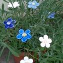 7db Kék vagy Fehér  Árnyalatú Mázas Keráma Virág, Otthon, lakberendezés, Dekoráció, Kerti dísz, Kaspó, virágtartó, váza, korsó, cserép, Kerámia, Szedj egy csokrot a virágos kertemből! Állíts össze a saját csokrod!Tedd kosárba valamelyik összeál..., Meska