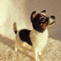 Kutya hasonmás - egyedi tűnemez chihuahua, Képzőművészet , Dekoráció, Szobor, Dísz, Nemezelés, Egy hasonmás kutya minden gazdi számára tökéletes meglepetés. Fénykép alapján dolgozom, egyedi megr..., Meska