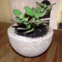pozsgás növény könnyűbeton tálban, Dekoráció, Otthon, lakberendezés, Dísz, Kaspó, virágtartó, váza, korsó, cserép, Mindenmás, Szárazságtűrő pozsgás növényt (Crassula ovata 'Hummel's Sunset')ültettem saját készítésű könnyűbeto..., Meska