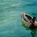 Wild Duck, Képzőművészet , Festmény, Akril, Festészet, Akril festmény vásznon.  Egy általam készült fénykép alapján.  Méretei: 30 x 40 x 1,5 cm  A vászon ..., Meska