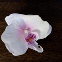 Orchidea hajdisz nagy, Esküvő, Hajdísz, ruhadísz, Virágkötés, Leheletnyi halvány rózsaszinű közepe van ennek a ,,REAL TOUCH,, (igazi érintés) orchideának. Valóba..., Meska