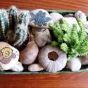 mini sziklakert 1, Dekoráció, Otthon, lakberendezés, Dísz, Kaspó, virágtartó, váza, korsó, cserép, Festett tárgyak, Mindenmás, Zöld bádogedénybe folyami kavicsokat tettem, közéjük élő növényeket helyeztem, kagylókkal, csigákka..., Meska