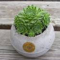 Gömbtartó kövirózsával, Dekoráció, Otthon, lakberendezés, Kaspó, virágtartó, váza, korsó, cserép, Mindenmás, Virágkötés, Kedves, helyes és zöld! Kellemes színfolt az otthonunkban, ez a természetes anyagú növénytartó, ben..., Meska
