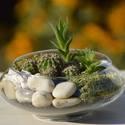 Pozsgások  üvegtálban, Dekoráció, Otthon, lakberendezés, Virágkötés, Pozsgásokat, kaktuszokat ültettünk szép formájú üvegtálba. A tartóba díszkavicsot és izlandi mohát ..., Meska