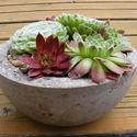 Betontál kövirózsákkal, Dekoráció, Otthon, lakberendezés, Dísz, Kaspó, virágtartó, váza, korsó, cserép, Virágkötés, Ebbe a szép formájú, könnyített beton tálba kövirózsákat ültettünk.  Kertünk, teraszunk természetes..., Meska