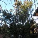 Madaras  borjúbőr kulcstartó, méhviaszolt., Mindenmás, Kulcstartó, Bőrművesség, Festett tárgyak, Madaras kulcstartó, méhviaszolt. , Meska