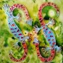Szerelmes gekkók, Képzőművészet, Napi festmény, kép, Festészet, 50X50 cm, síküvegre üvegfestés technikával készült üvegfestmény , Meska