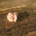 Kerámia  rózsa, Dekoráció, Otthon, lakberendezés, Dísz, Kerámia, Fehérre égő agyagból készítettem ezt a virágot.   Mázazott,kétszer égetett kerámia.A teljes virágfe..., Meska
