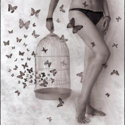 PillangoButterfly