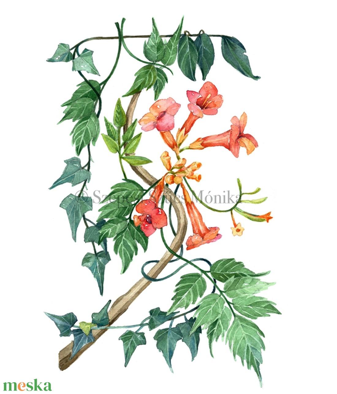 Trombitafolyondár és borostyán - Print (Akvarell) (BotanikAkvarell) - Meska.hu