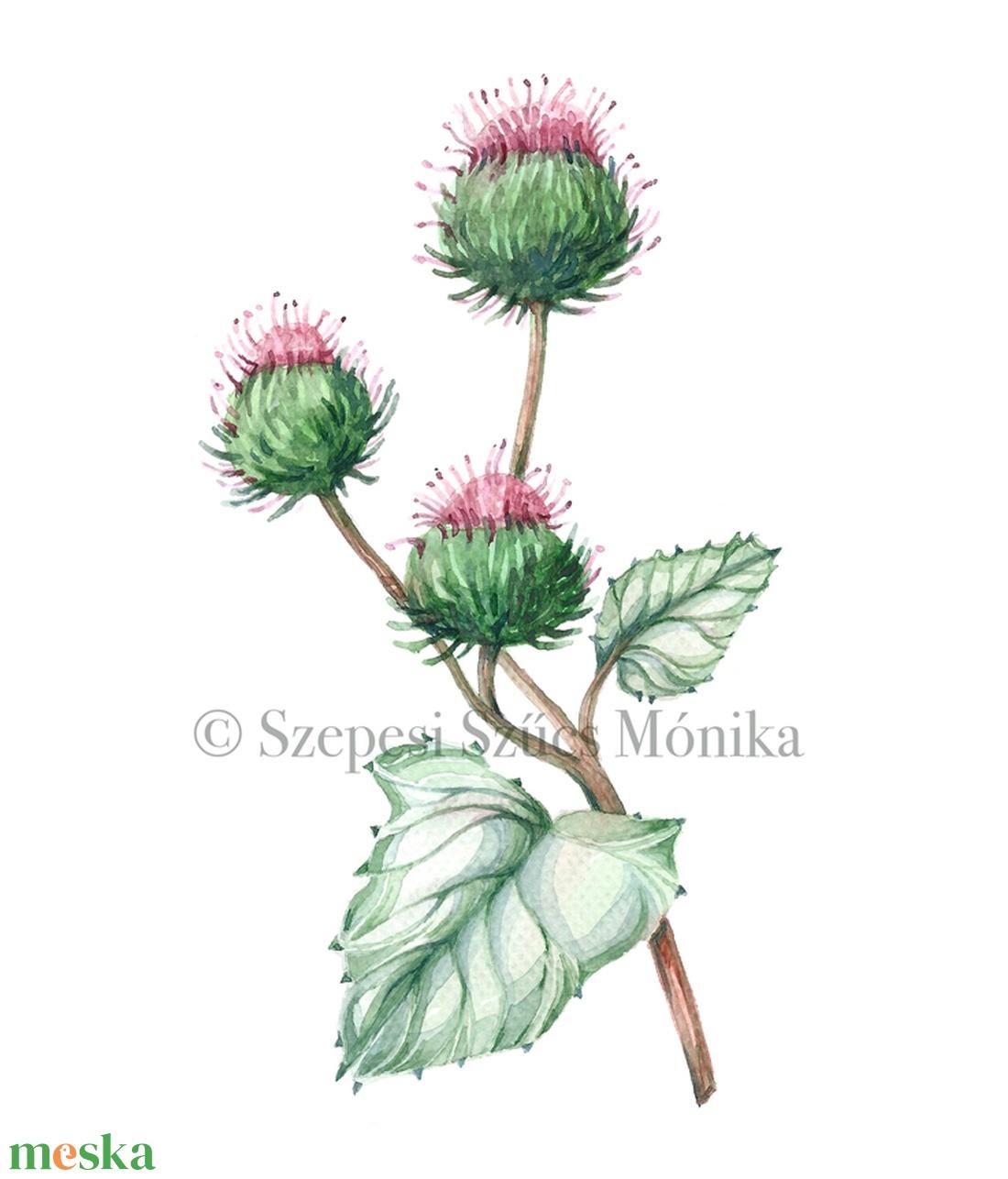 Bojtorján - Print (Akvarell) (BotanikAkvarell) - Meska.hu