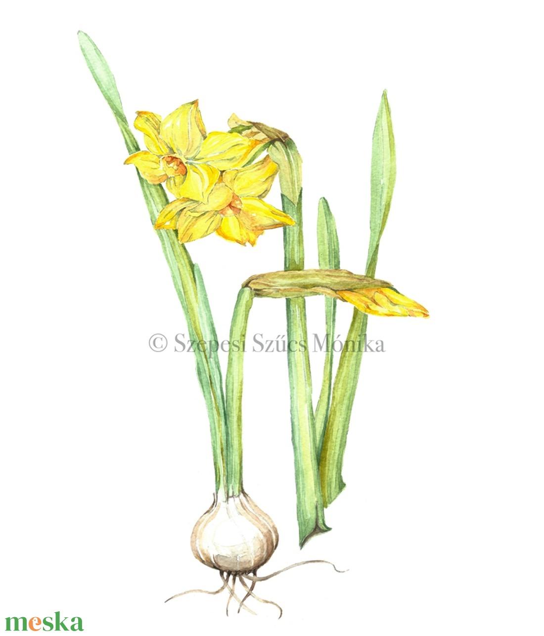 Nárcisz - Print (Akvarell) (BotanikAkvarell) - Meska.hu