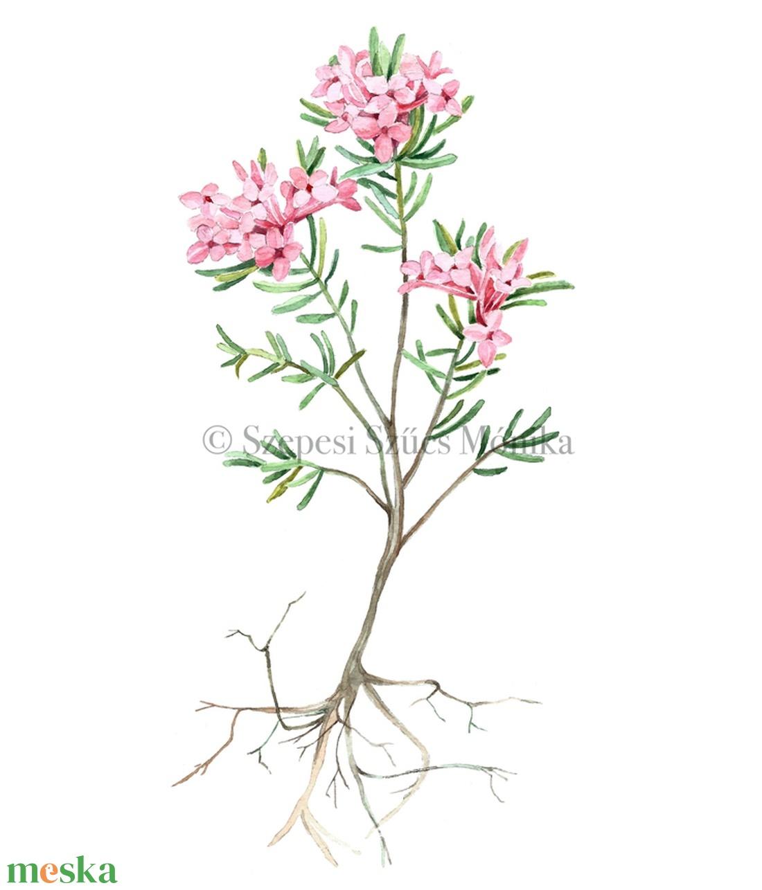 Boroszlán - Print (Akvarell) (BotanikAkvarell) - Meska.hu