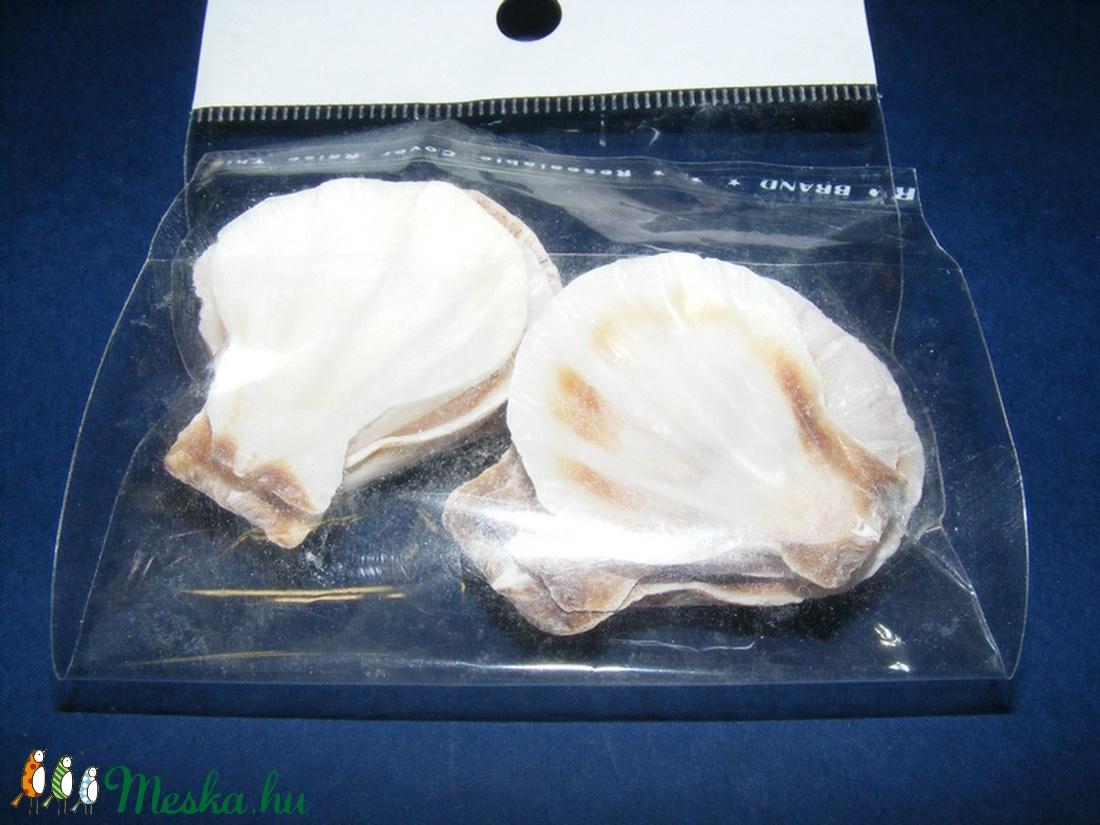 Natúr kagyló/csiga (9. minta/6 db) - szívkagyló - közepes - vegyes alapanyag - Meska.hu