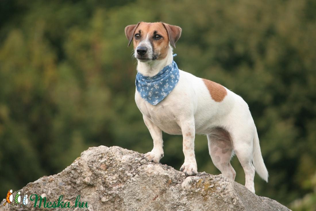 Kutyakendő (Frakkshop) - Meska.hu
