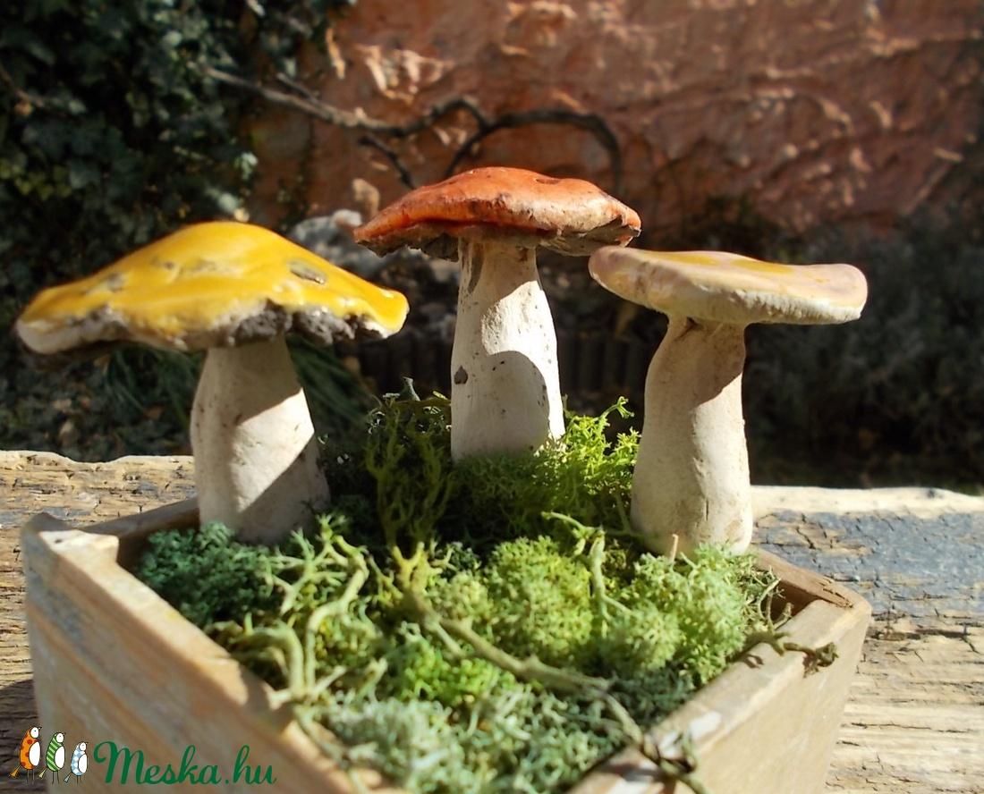 apró gombák