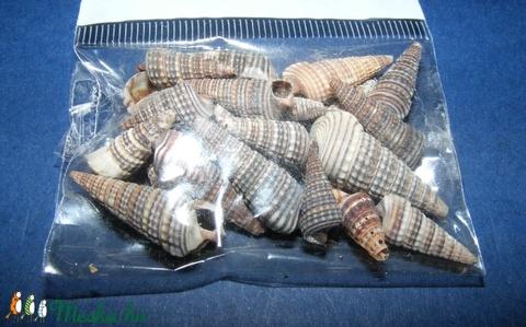 Natúr kagyló/csiga (8. minta/20 db) - orishell - Meska.hu