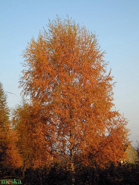 Gyöngyből készített őszi nyírfa  GYV01-3-33 (gyongyvilag) - Meska.hu