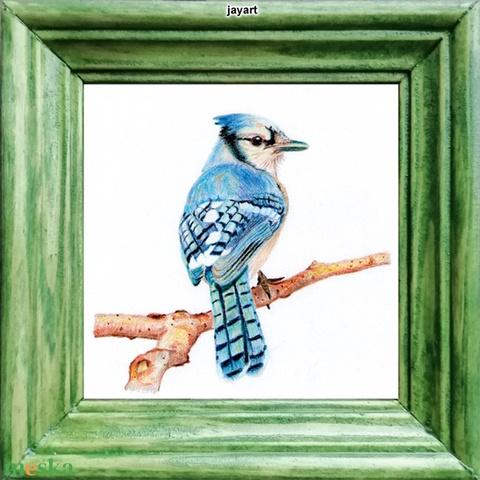 Kék szajkó - Mini-kép színes fa képkerettel - Meska.hu