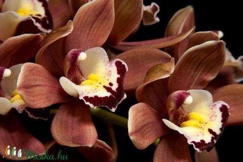 Chocolate orchid mangóvajas egyedi orchidea szappan ajándék szülinapra névnapra normál száraz zsíros érett bőrre (medalin) - Meska.hu