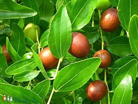 Vegán jujube sampon szappan zöld teával piros mandarinnal környezettudatos természetes natúr ajándék szülinapra névnapra (medalin) - Meska.hu