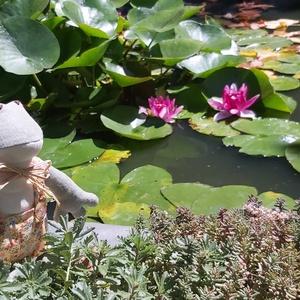 Kertész béka, Tavaszi kertész béka, szövetből foltvarrással készült textil béka, egyaránt alkalmas beltérre: fürdő..., Meska