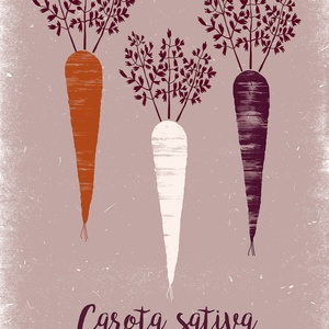 Konyhai dekoráció, fali kép, fehér, lila, okker répák lila háttéren felirattal - A4 illusztráció (agnescor) - Meska.hu