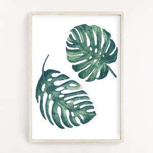 Monstera növény dekor poszter A4 - Botanikai illusztráció - vízfesték hatással, Művészet, Művészi nyomat, Fotó, grafika, rajz, illusztráció, Papírművészet, Monstera növény  dekor poszter A4 - Botanikai illusztráció - vízfesték hatással (No.15)\n\nSzoba, napp..., Meska