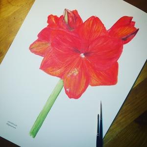 Amarillisz: akvarell festmény/falikép virág, Képzőművészet, Otthon & lakás, Festmény, Akvarell, Lakberendezés, Festészet, Mindenmás, Eredeti akvarell festményemről készült kiváló minőségű nyomat.\nMéret A4.\nSzemélyesen Törökbálinton t..., Meska
