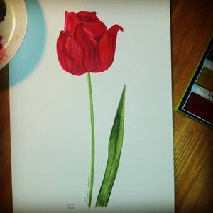 Tulipán: akvarell festmény/falikép virág , Képzőművészet, Otthon & lakás, Festmény, Akvarell, Lakberendezés, Festészet, Mindenmás, Eredeti akvarell festményemről készült kiváló minőségű nyomat.\nMéret A4.\nSzemélyesen Törökbálinton t..., Meska