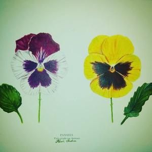 Árvácskák: akvarell festmény/falikép virág, Képzőművészet, Otthon & lakás, Festmény, Akvarell, Lakberendezés, Festészet, Mindenmás, Eredeti akvarell festményemről készült kiváló minőségű nyomat.\nMéret A4.\nSzemélyesen Törökbálinton t..., Meska