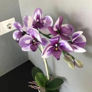 Harisnyavirág orchidea, Otthon & Lakás, Csokor & Virágdísz, Dekoráció, Virágkötés, Meska