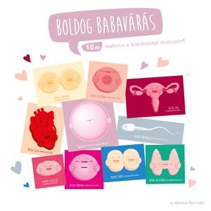 Boldog Babavárás / petesejt / hímivarsjet / szerelem / babamama / baba / csecsemő / terheség / várndósság / kismama, Művészet, Grafika & Illusztráció, Mindennapos boldogság és egészségtudat egy matrica barátságával!  Ajándékozd meg szeretteidet, barát..., Meska