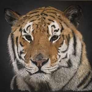 Tigris/Tiger, Zsűrizett festmény/Jury painting, Képzőművészet, Otthon & lakás, Festmény, Pasztell, Dekoráció, Festészet, Zsűrizett eredeti festmény/Jury painting\n(Minősítés/Rating code: TM-A-46/218/2018)\nFekete műanyag ke..., Meska