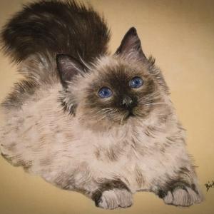 Himalája cica (olaj), Olajfestmény, Festmény, Művészet, Festészet, Eredeti festmény a művésztől!\nOlajfestmény, farost lemezre. A képet kiváló minőségű festékkel festet..., Meska