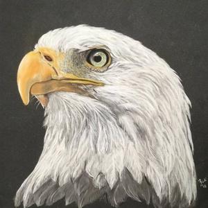 Sas/Eagle, Zsűrizett festmény/Jury painting, Otthon & lakás, Képzőművészet, Festmény, Pasztell, Dekoráció, Zsűrizett eredeti festmény/Jury painting (Minősítés/Rating code: TM-A-46/217/2018) Fekete műanyag ke..., Meska