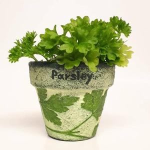 Fűszernövényes kaspó petrezselyem különleges ajándék botanikát konyhai fűszereket kedvelőnek kertészeknek kertbarátoknak, Otthon & Lakás, Ház & Kert, Cserép & Kaspó, Decoupage, transzfer és szalvétatechnika, Fűszernövényes kaspó petrezselyem, különleges ajándék botanikát, konyhai fűszereket kedvelőknek, hob..., Meska